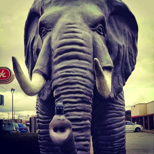 elephanthippo